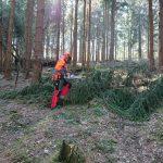 Mitarbeiter der Waldwacht bei der Vorarbeit