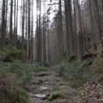 Blick Weberschlüchte - kein Holzeinschlag