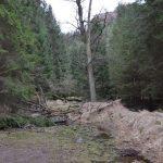 Ende Holzeinschlag am Abzweig Hickelschlüchte