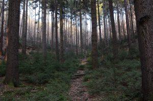 Waldpfad zum Elbleitenweg