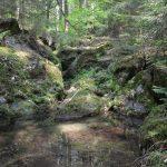 Waldflüßchen