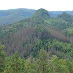 Blick vom Großen Pohlshorn Richtung Teichsteinrücken und Schäferstein