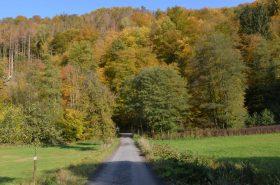 Eingang Herbstwald