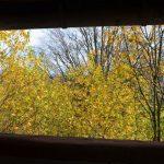 Herbst aus dem Fenster