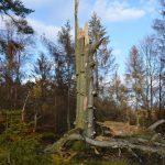 lebendiges Totholz